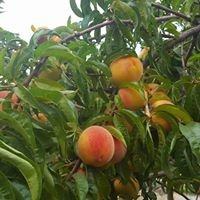 Tyler's Rocky Point Orchard