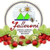 Azienda Agricola Paolo Falleroni