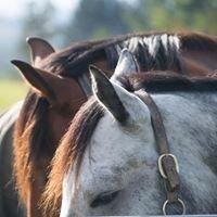 HorseTouch Life Design
