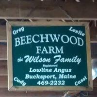 Maine Lowline Cattle from Beechwood Farm
