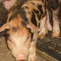 Hazel Creek Hog Farm