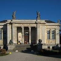 Musée Des Sciences Naturel Bruxelles Belgique