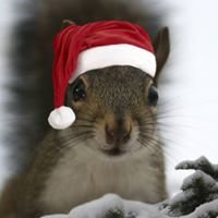 Squirrel Hill Consulting