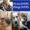 Catloversanddoglovers