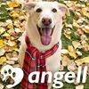 Angell Animal Medical Center thumb