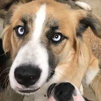 RUFF House Dog Daycare
