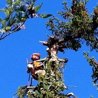 Simon Stratford Tree Surgeon/Arboriste