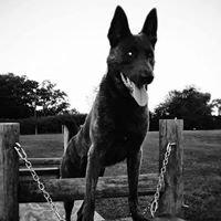 World Class Canine - Charlotte NC / York SC