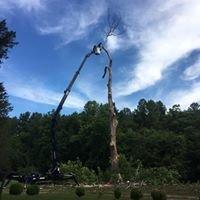 Arbor Pro of Virginia - 434.390.7708 Full Service Tree Care