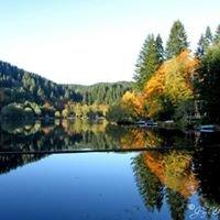 Fishhawk Lake Real Estate Gayle Rich-Boxman  John L Scott Market Center