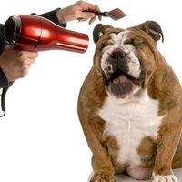 Good Dog Pet Grooming