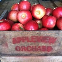 Appleview Orchard