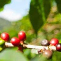 Harmon Coffee