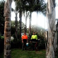 Adelaide's Affordable Tree Removal