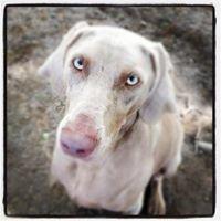 Animal Crackers Pet Care, LLC