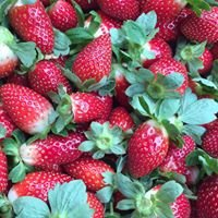 Pappy's Strawberry Patch
