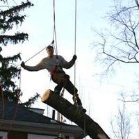 Arelica Tree Service
