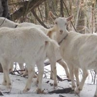 Spiral Goat Farm
