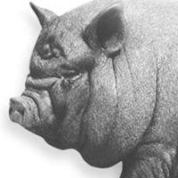 Black Pig Ltd