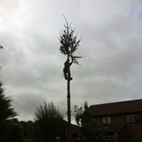 Tree and Shrub Services
