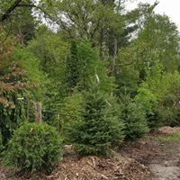 Branch Landscape Nursery