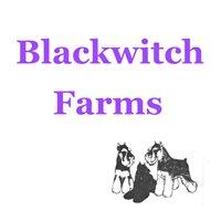 Blackwitch Farms