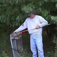 WildCatch  Nuisance Animal control  solutions  Northeastern. MI