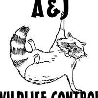 Ottawa County Ohio Wildlife Removal
