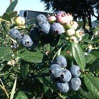 Green Acres Fernery & Citrus, Inc.
