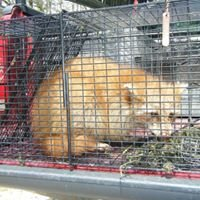 ADC Naturespect LLC, Wildlife Nuisance Removal