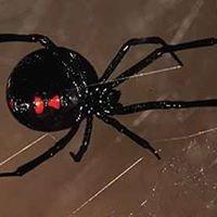 Bander Pest Services