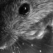 Covkill pest control services