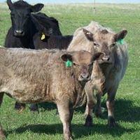 Gotschall Organic Grassfed Beef