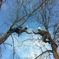 Tree Loving Care