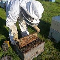 Geelong Beekeepers Club Inc.