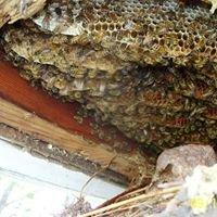 Oklahoma Bee Removal