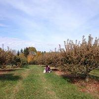 granville Apple orchard