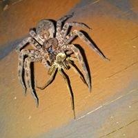 Extreme Pest Control LLC
