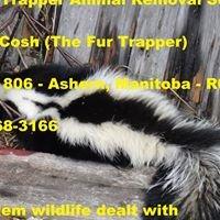The Fur Trapper Animal Removal Services - Ashern, Manitoba