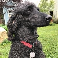 Pets Doc Veterinary Clinic