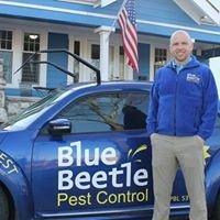Blue Beetle Pest Control