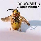 INNOVATED Pest Management