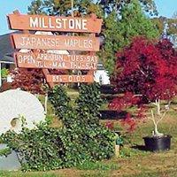 Millstone Japanese Maple Nursery