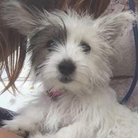 Ajax Pet Care