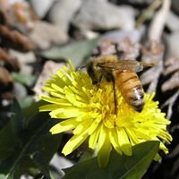 Greidanus Honey Mill