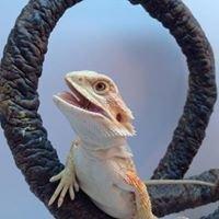 Saharaz Dragonz and Reptilez