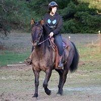 Rain Horse Training