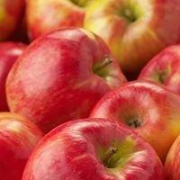 Rock Ridge Orchard, LLC