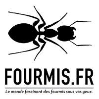 Fourmis.fr