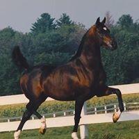 Double A Arabians (AA Farm, Inc)